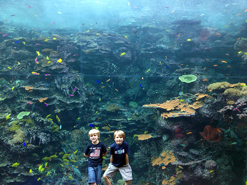 Boys-Fish-GeorgiaAquarium