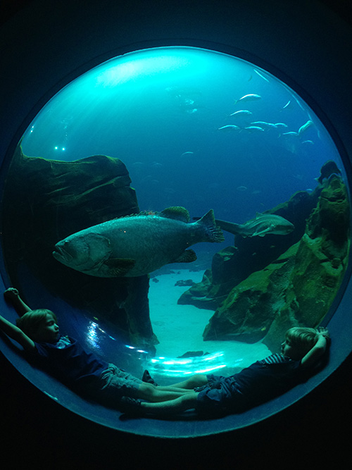 Boys_Fish_Porthole_GeorgiaAquarium