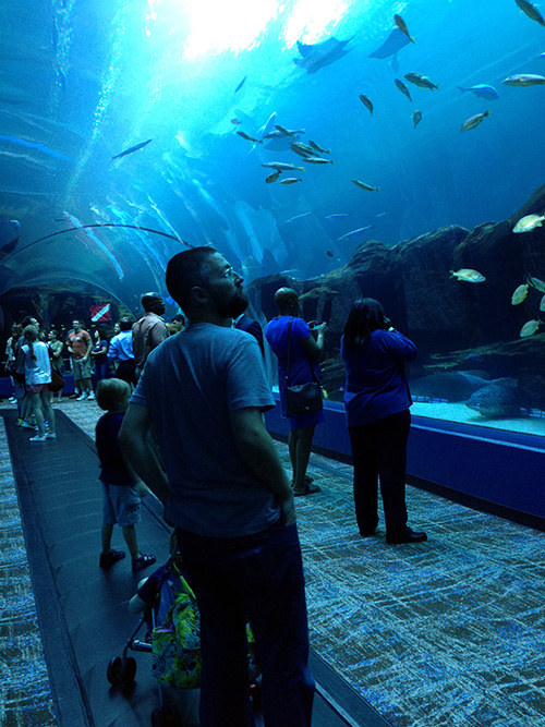 Brian_FishTunnel_GeorgiaAquarium