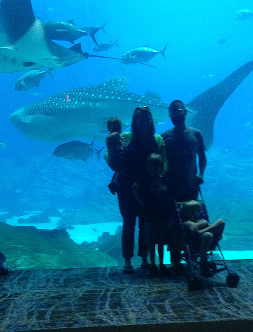 Family_Fish_GeorgiaAquarium