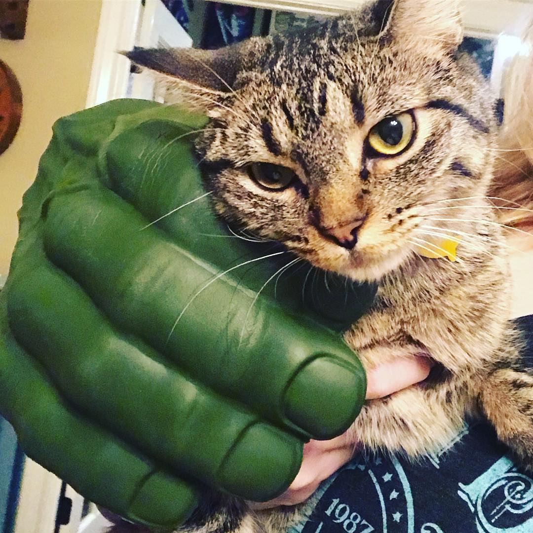 When you have Hulk hands and a cat a scenariohellip